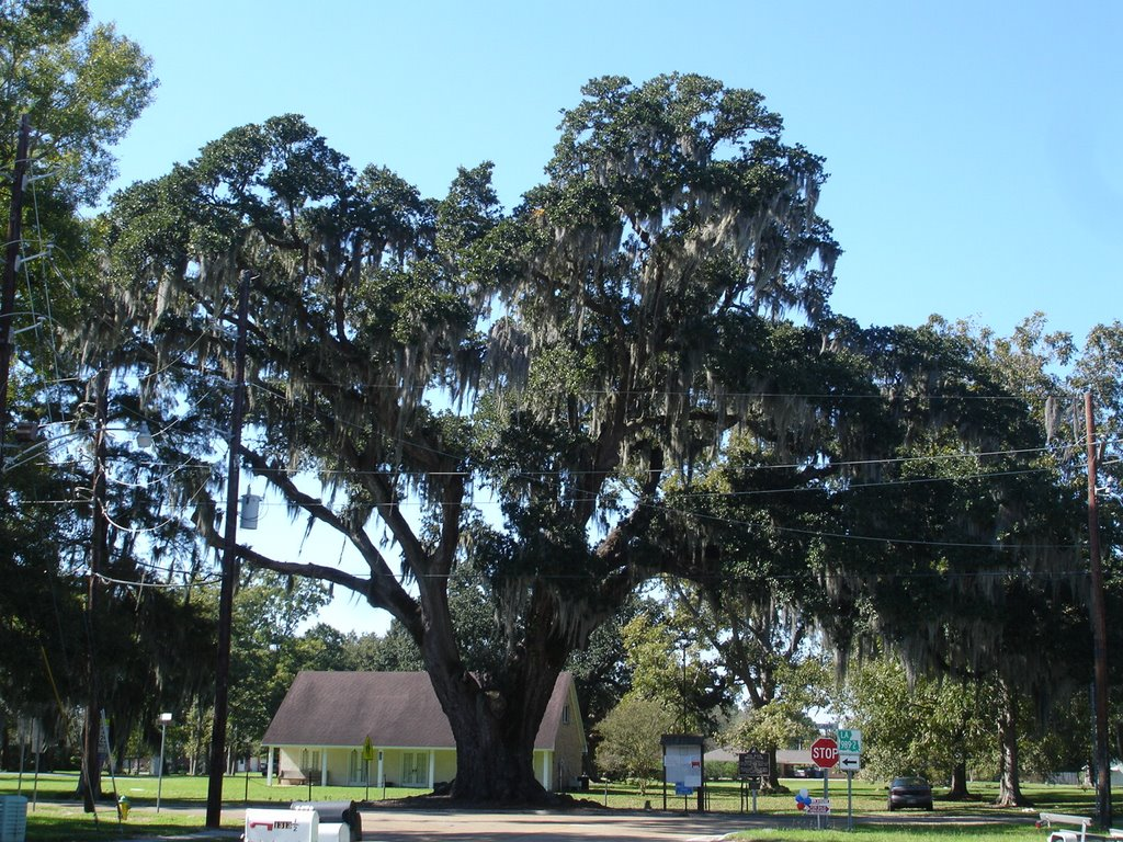 Brusly Oak.jpg
