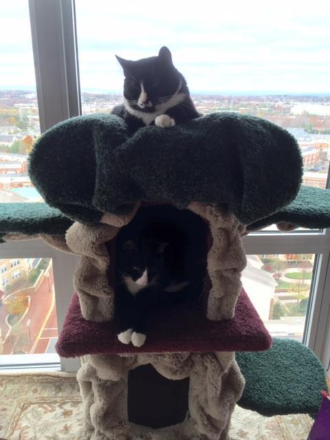 Kittiesincondo.JPG