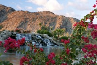 Bougainvillea Waterfall in South Palm Springs