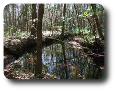 Wakulla County Land For Sale.png