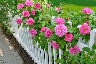 homes for sale Floral Park, NY include wonderful gardens