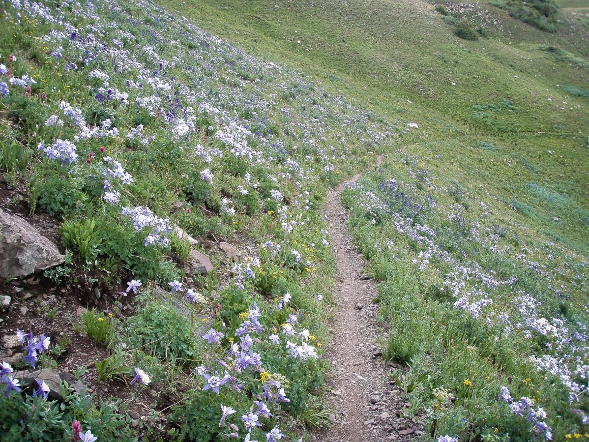path through wildflowers.jpg