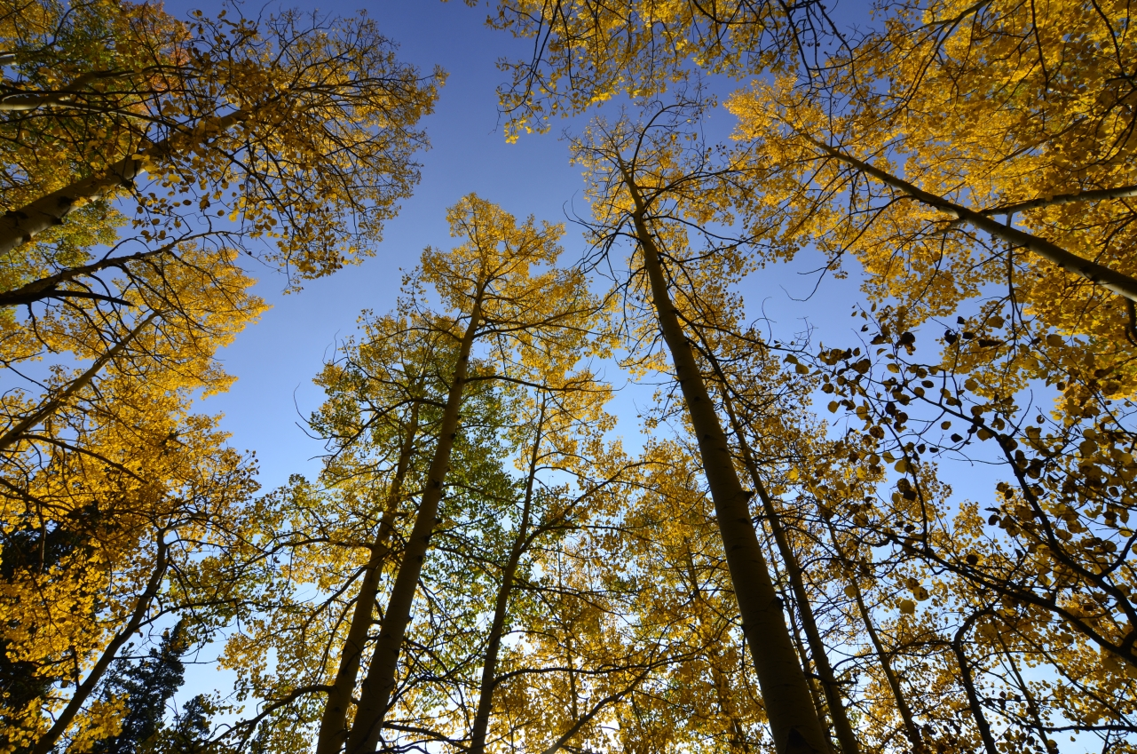 fall tree tops.jpg