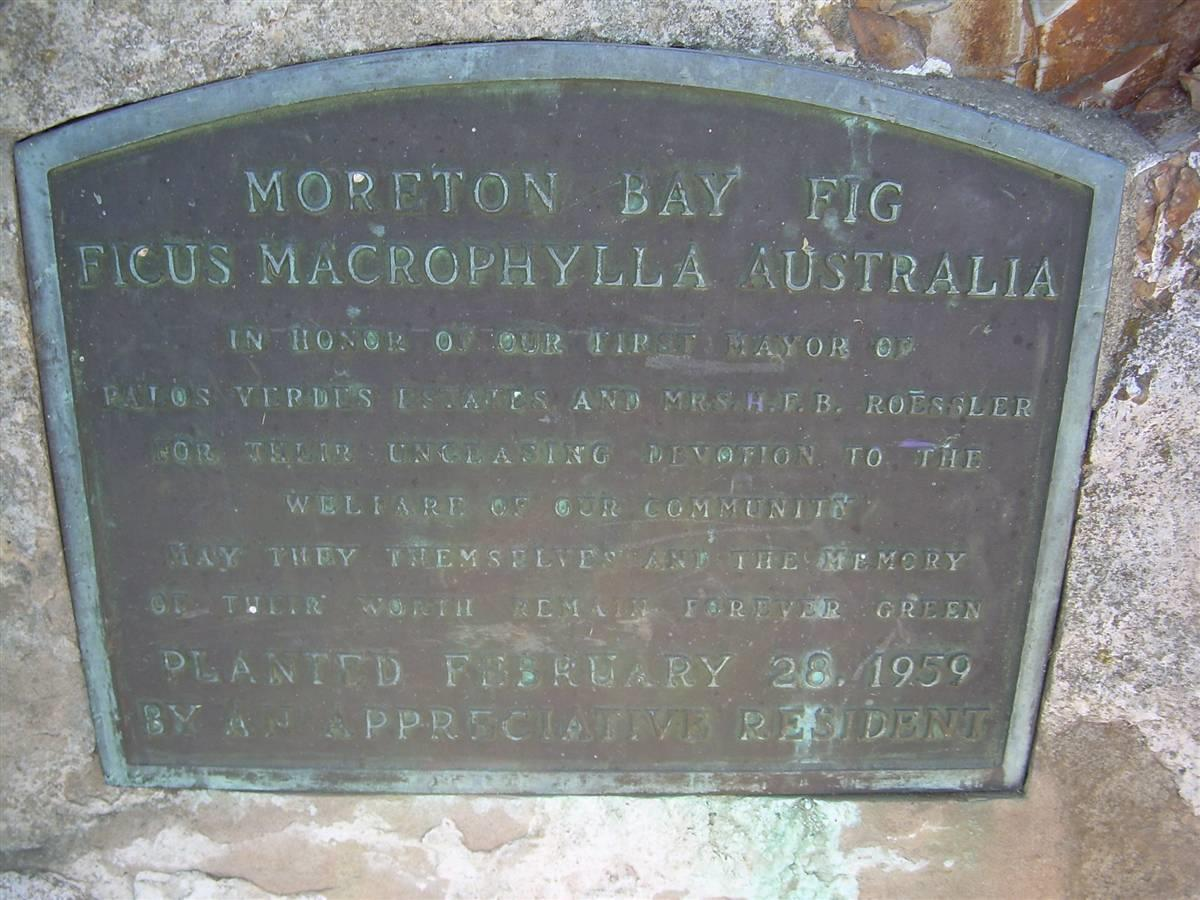 Lunada Bay Australian Fig Tree Plaque