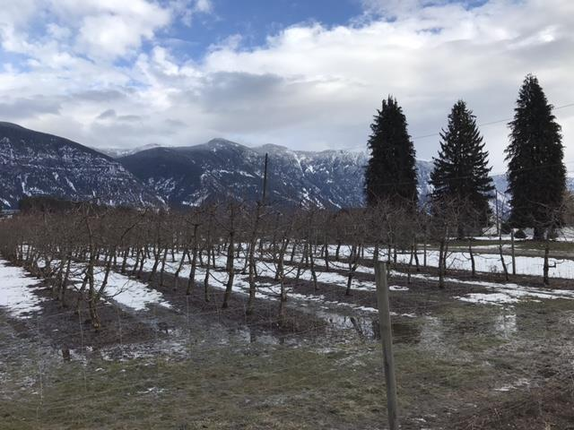 image of orchards in Creston, BC