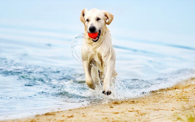 dog-onbeach-small.jpg