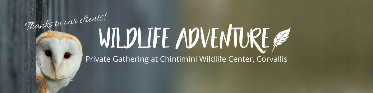 WildlifeAdventure-websitecoverphoto.png